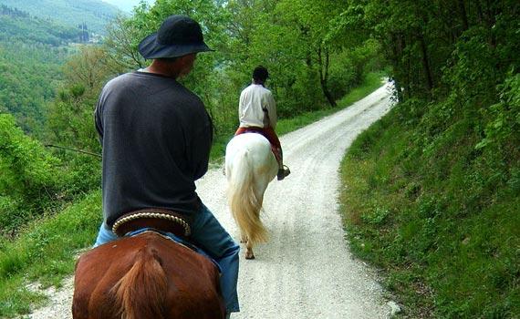 tuscany horses